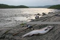 Fiske eller fiskeferie i norge?